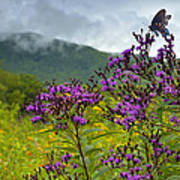 Mountain Butterfly  Poster