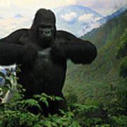 Mountain Gorilla Poster
