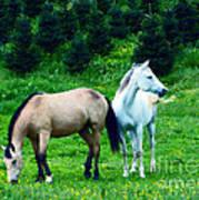 Mountain Horses Grazing  Poster