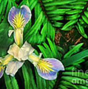Mountain Iris And Ferns Poster