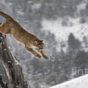 Mountain Lion - Silent Escape Poster by Wildlife Fine Art