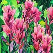 Mountain Meadows' Paintbrush Poster