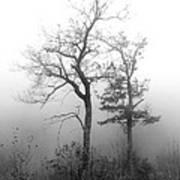 Mountain Mist Poster