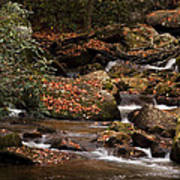 Mountain Stream Poster by Cindy Rubin