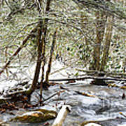 Mountain Stream In Winter Poster