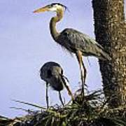 Mr. And Mrs. Heron Poster
