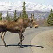 Mr Moose Poster