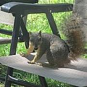 Mr. Squirrel Relaxing Poster