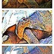 Mr. Tortoise Vertical Triptych Poster