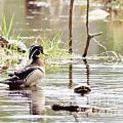 Mr. Wood Duck And Friends Poster