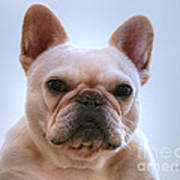 French Bulldog Seriously Poster