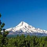 Mt. Hood And Pine Trees Poster