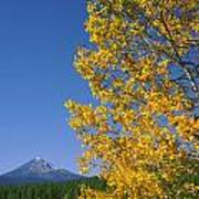 1m5720-mt. Mcloughlin In Fall, Or Poster
