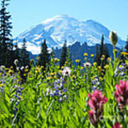 Mt. Rainier Wildflowers Poster