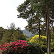 Muckross Garden In Spring Poster