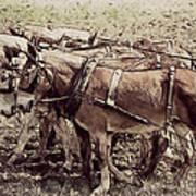 Mule Team Poster
