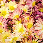 Multi-colored Daisies Poster