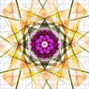 Multi Flower Abstract Poster