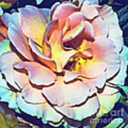 Multicolor Rose Photoart Poster
