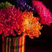 Multicolored Chrysanthemums In Paint Can On Chest Of Drawers Int Poster