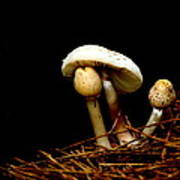 Mushroom 1 Poster