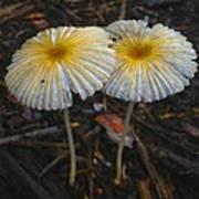 Mushroom Flowers Poster