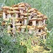 Mushroom Gold Poster