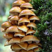 Mushrooms 2 Poster