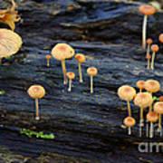 Mushrooms Amazon Jungle Brazil 4 Poster