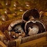 Mushrooms In A Basket Poster