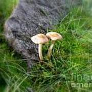 Mushrooms In Grass Poster