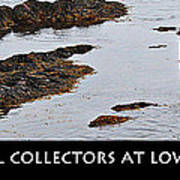 Mussel Collectors At Low Tide - Shellfish - Low Tide Poster
