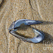 Mussel Shell On The Beach Poster