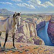 Mustang At Bighorn Canyon Poster by Paul Krapf
