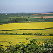 Mustard Colour Fields Poster