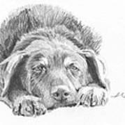 Mutt Pencil Portrait Poster