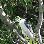 My Blue Heron Poster