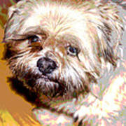 My Friend Lhasa Apso Poster