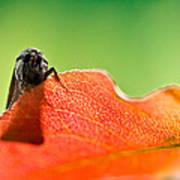 My Leaf Poster
