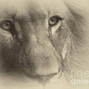 My Lion Eyes In Antique Poster