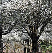 My Neighborhood In Spring Poster