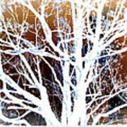 My Neighbor's Tree Poster