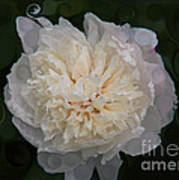 Mysterious White Peony Abstract Painting Poster