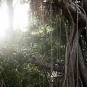 Mystic Jungle Poster
