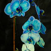 Mystique Blue Orchids Poster