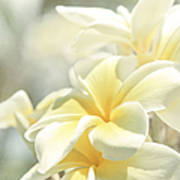 Na Lei Pua Melia Aloha E Ko Lele Poster