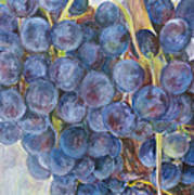 Napa Grapes 1 Poster by Nick Vogel