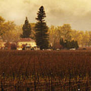 Napa In The Fall Poster