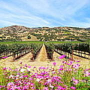 Napa Valley Vineyard With Cosmos Poster