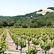 Napa Vineyard With Hills Poster by Shane Kelly